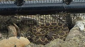 snake proof fencing san diego